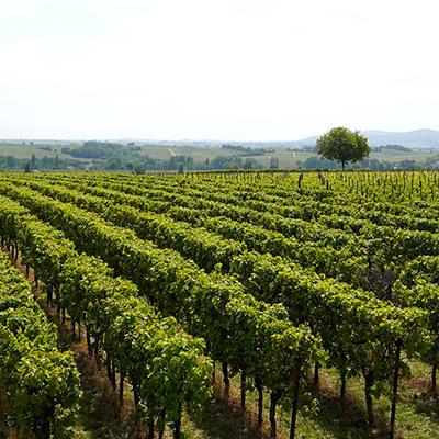 Weinwanderung Ansbach